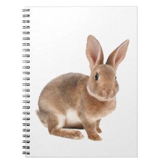 Conejo de Rex Libretas