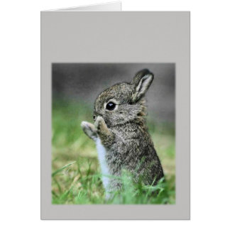 Conejo del bebé tarjeton
