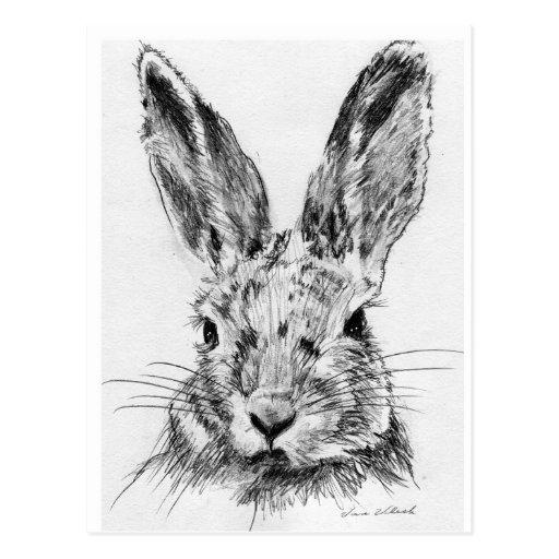 Conejo del conejo postales