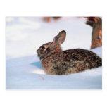 Conejo del invierno postal