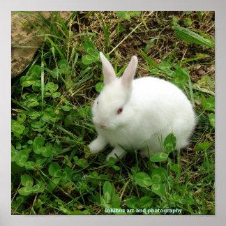 Conejo del trébol poster