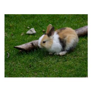 Conejo dulce del bebé postal