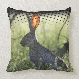 Conejo en la caja salvaje de la almohada