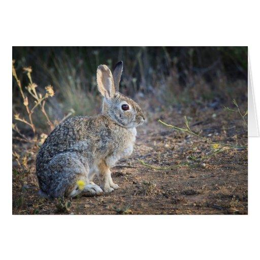 Conejo en las maderas tarjeta de felicitación
