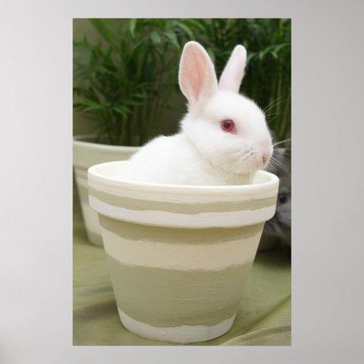 conejo en un poster del pote de la planta