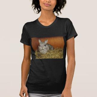 Conejo enano de Netherland Camisas