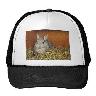 Conejo enano de Netherland Gorras De Camionero