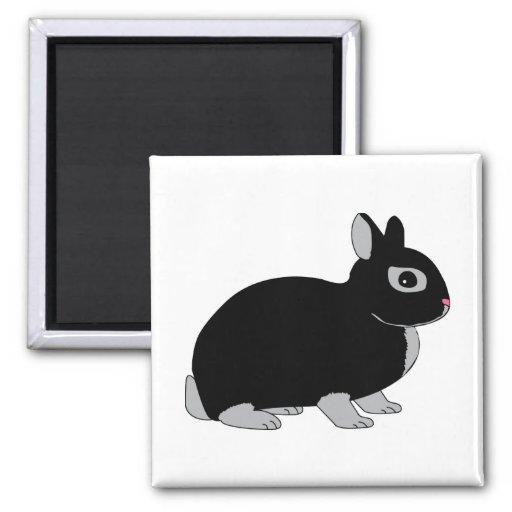 Conejo enano de Netherland Imán Cuadrado