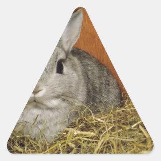 Conejo enano de Netherland Calcomanías De Trianguloes Personalizadas