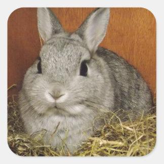 Conejo enano de Netherland Pegatina Cuadrada