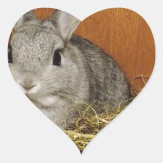 Conejo enano de Netherland Pegatina En Forma De Corazón