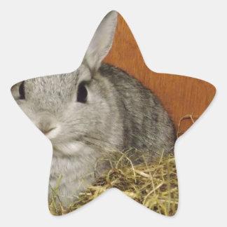 Conejo enano de Netherland Pegatina En Forma De Estrella