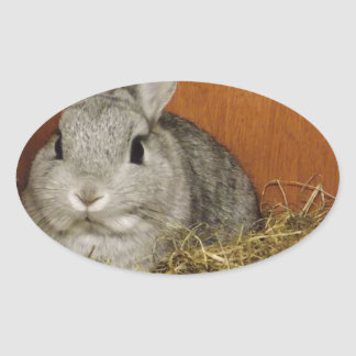 Conejo enano de Netherland Pegatina Ovalada
