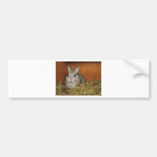 Conejo enano de Netherland Pegatina Para Auto