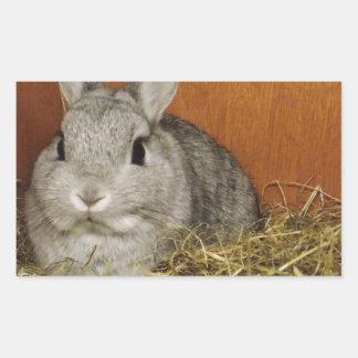 Conejo enano de Netherland Pegatina Rectangular