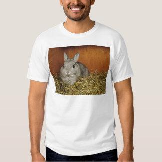 Conejo enano de Netherland Poleras