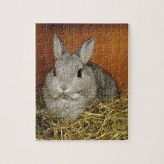 Conejo enano de Netherland Puzzle Con Fotos
