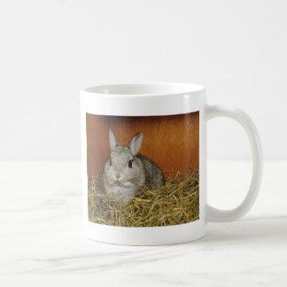 Conejo enano de Netherland Tazas