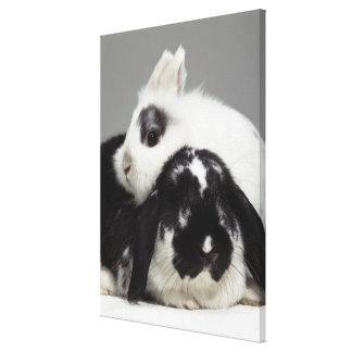 conejo Enano-espigado que se inclina sobre de orej Lona Envuelta Para Galerias