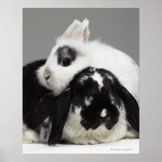 conejo Enano-espigado que se inclina sobre de orej Posters