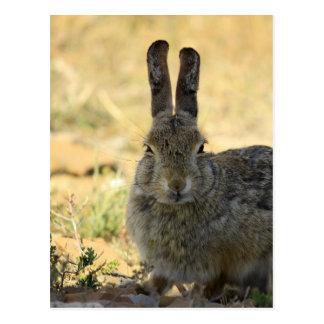 Conejo enojado postales
