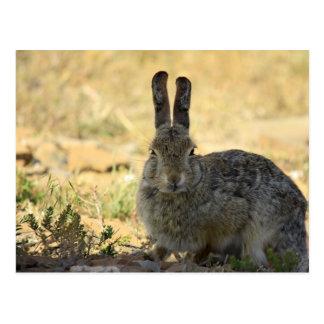 Conejo enojado tarjetas postales