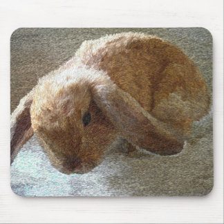 Conejo espigado de Holanda Lop Mouse Pads
