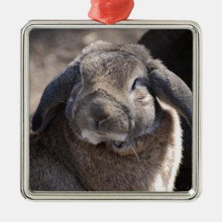 Conejo espigado del Lop Adorno Cuadrado Plateado