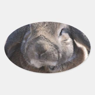 Conejo espigado del Lop Pegatina De Ovaladas