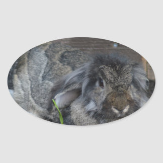 Conejo espigado del Lop Colcomanias Óval