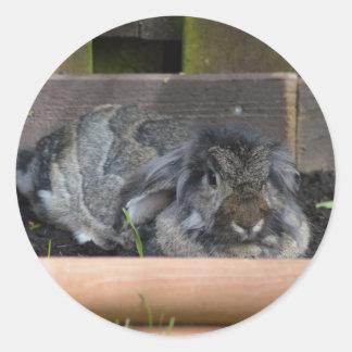 Conejo espigado del Lop Pegatinas Redondas