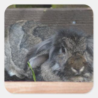 Conejo espigado del Lop Pegatina Cuadradas