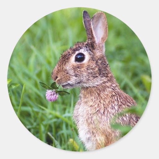 Conejo Etiqueta Redonda