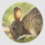 Conejo Etiquetas Redondas