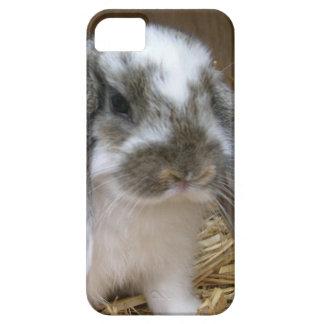 Conejo flojo de los oídos iPhone 5 fundas