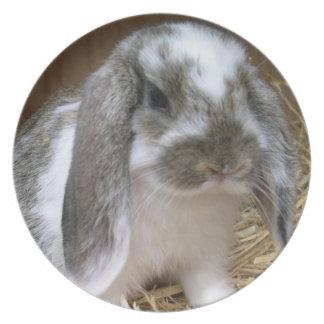 Conejo flojo de los oídos plato de cena