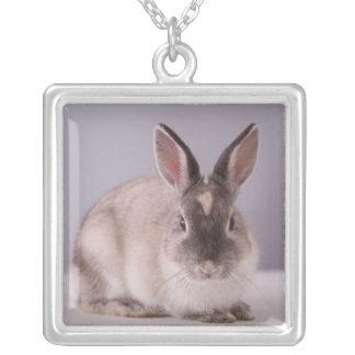 conejo, fondo simple, animal, tabla blanca, collar plateado