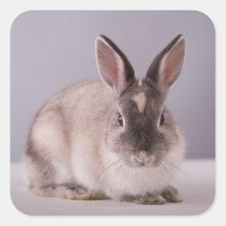conejo, fondo simple, animal, tabla blanca, pegatina cuadrada
