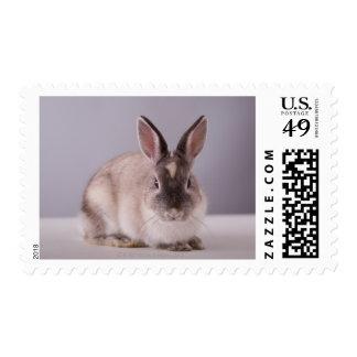 conejo, fondo simple, animal, tabla blanca, sellos