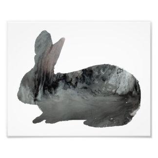 Conejo Fotografía