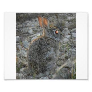 Conejo Fotografías