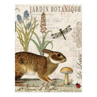 conejo francés del vintage moderno en el jardín postales