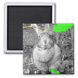 Conejo gigante flamenco B y W con las hojas verdes Iman Para Frigorífico