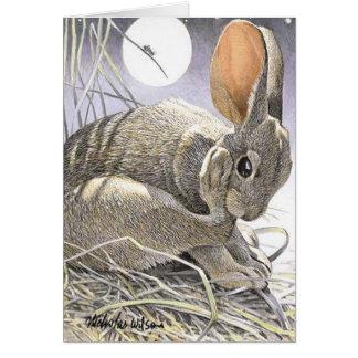 Conejo grillo y luna NOCHES de VERANO Tarjetón