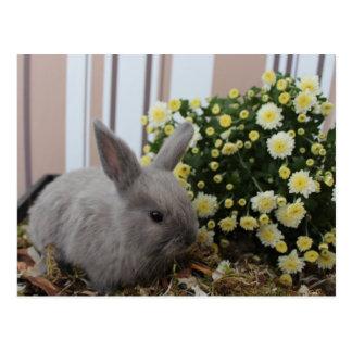 conejo gris de bebé, conejo, conejillo postal