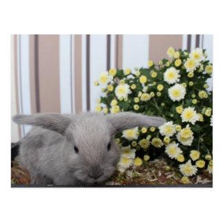 conejo gris de bebé, conejo, conejillo tarjetas postales