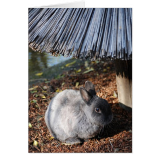 Conejo gris tarjeta de felicitación
