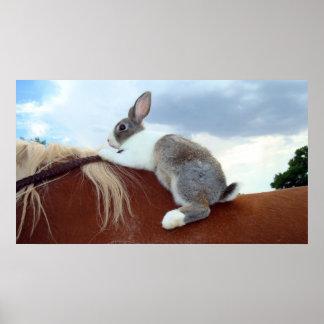 Conejo holandés que monta un caballo póster
