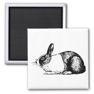 Conejo Imán