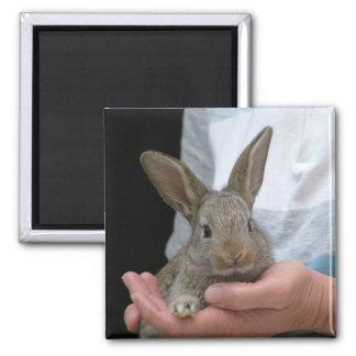 conejo imán cuadrado